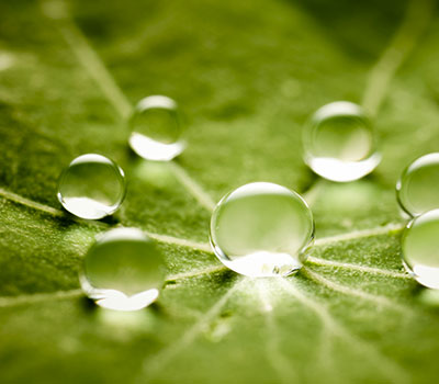 green leaf with water bubbles
